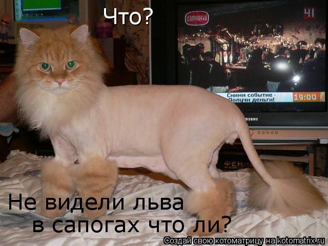 Котоматрица: Что? в сапогах что ли? Не видели льва