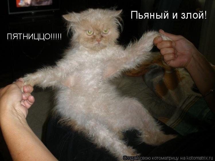 Котоматрица: ПЯТНИЦЦО!!!!! Пьяный и злой!