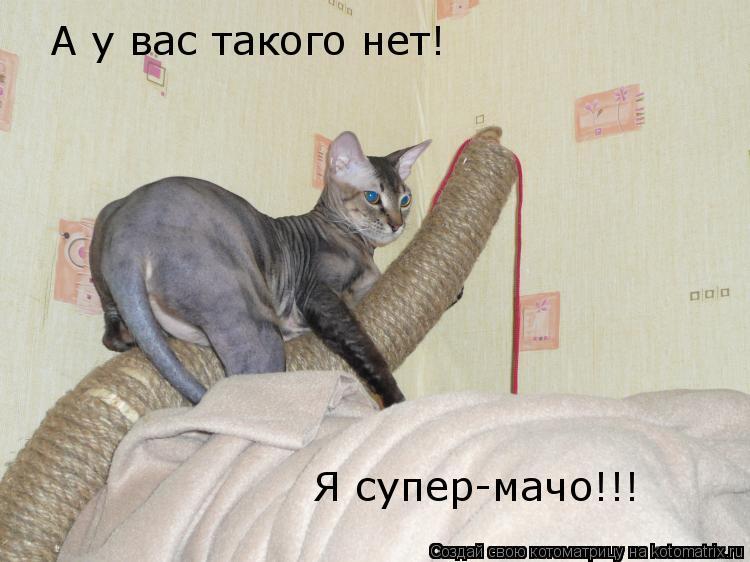 Котоматрица: А у вас такого нет! Я супер-мачо!!!