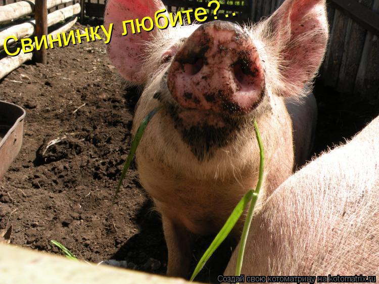 Котоматрица: Свининку любите?..