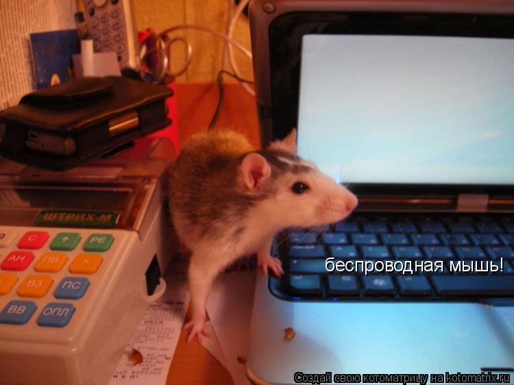 Котоматрица: беспроводная мышь!