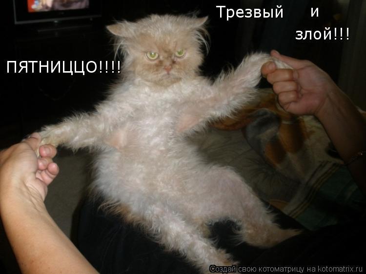 Котоматрица: ПЯТНИЦЦО!!!! Трезвый и злой!!!