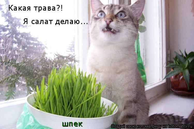 Котоматрица: Какая трава?! Я салат делаю... шпек