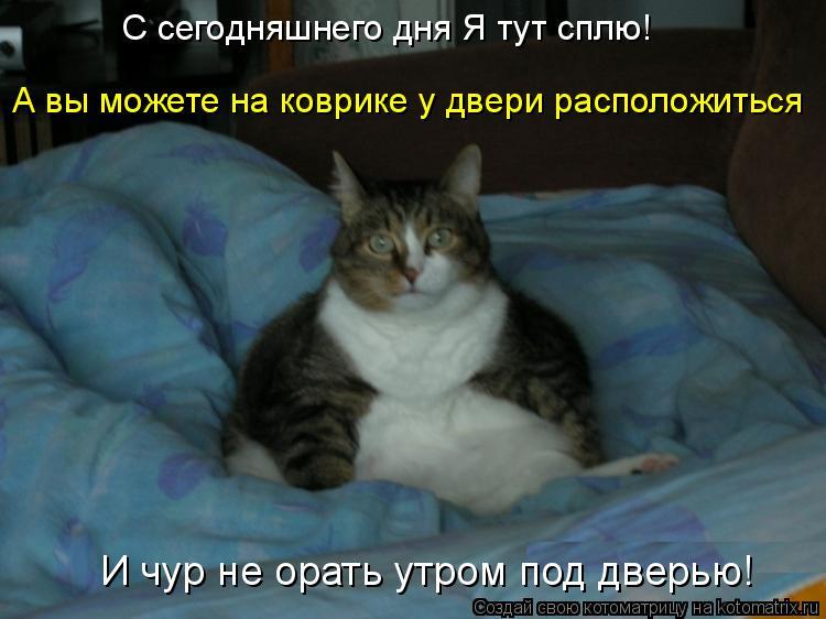 Котоматрица: С сегодняшнего дня Я тут сплю! А вы можете на коврике у двери расположиться И чур не орать утром под дверью!