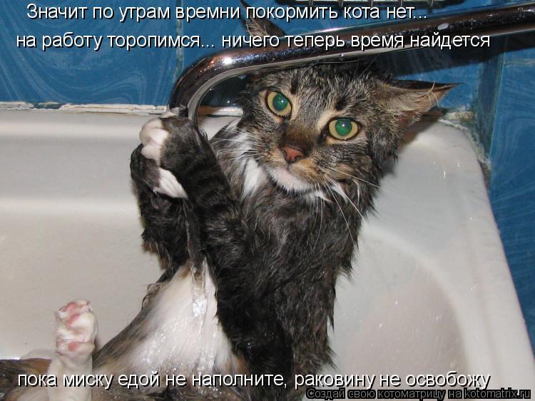 Котоматрица: на работу торопимся... ничего теперь время найдется Значит по утрам времни покормить кота нет... пока миску едой не наполните, раковину не ос