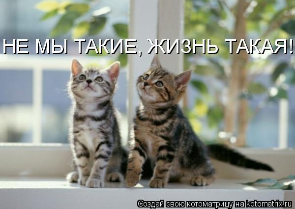 Котоматрица: НЕ МЫ ТАКИЕ, ЖИЗНЬ ТАКАЯ!!!
