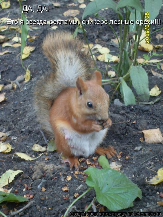 Котоматрица: ДА, ДА!  Ето я звезда рекламы, сникерс лесные орехи!!!
