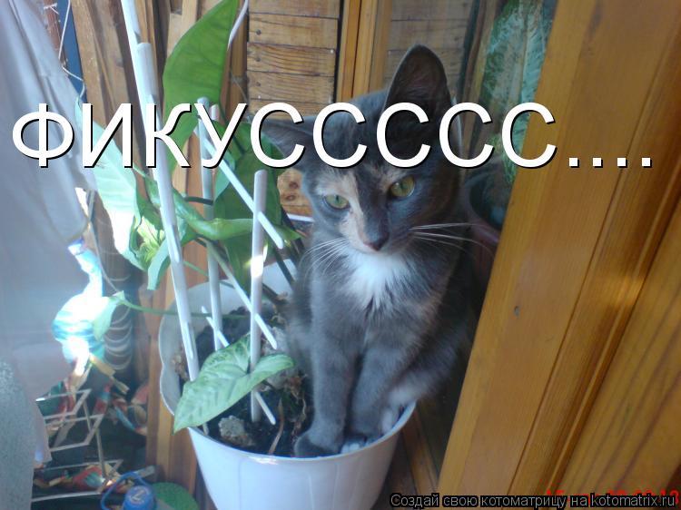 Котоматрица: ФИКУССССС....