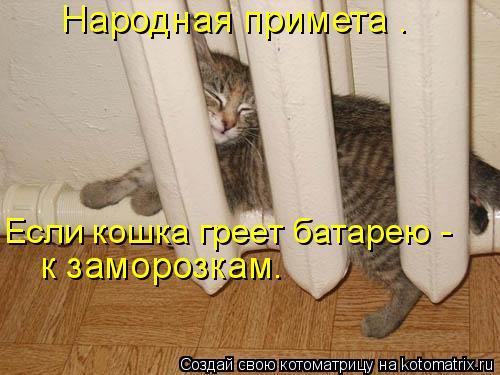 Котоматрица: Если кошка греет батарею - к заморозкам. Народная примета .