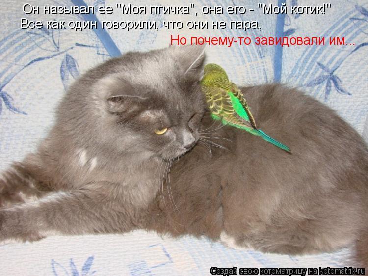 """Котоматрица: Он называл ее """"Моя птичка"""", она его - """"Мой котик!"""" Но почему-то завидовали им... Все как один говорили, что они не пара,"""
