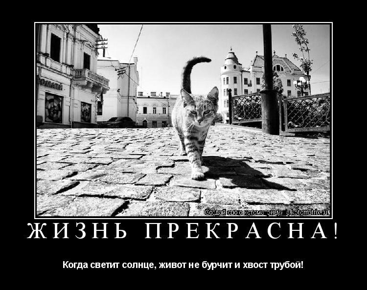 Котоматрица: Жизнь прекрасна! Когда светит солнце, живот не бурчит и хвост трубой!