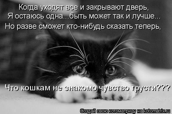 Котоматрица: Когда уходят все и закрывают дверь, Я остаюсь одна...быть может так и лучше... Но разве сможет кто-нибудь сказать теперь, Что кошкам не знакомо