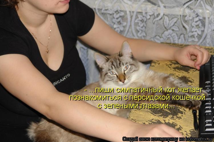 Котоматрица: - ...пиши симпатичный кот желает познакомиться с персидской кошечкой с зелеными глазами...