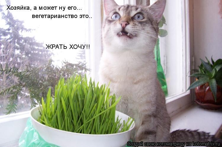 Котоматрица: Хозяйка, а может ну его...  вегетарианство это.. ЖРАТЬ ХОЧУ!!