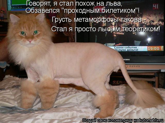 """Котоматрица: Говорят, я стал похож на льва, Обзавелся """"проходным билетиком""""! Стал я просто лысым теоретиком! Грусть метаморфозы такова -"""