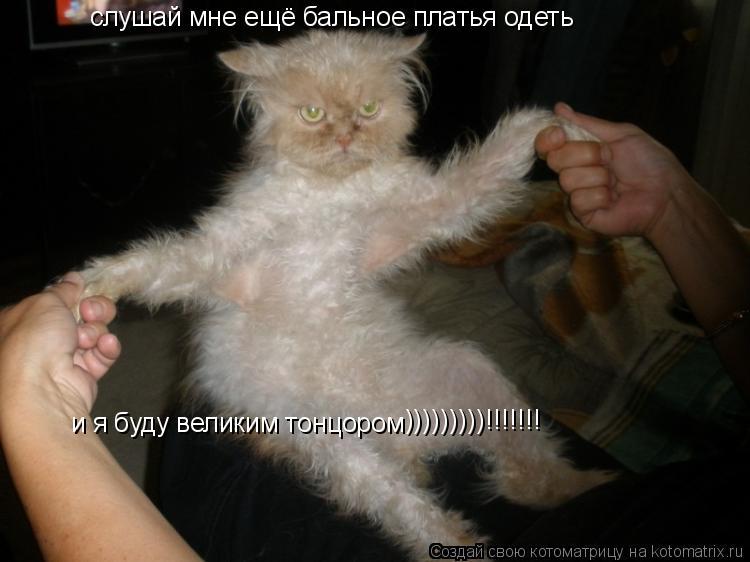 Котоматрица: слушай мне ещё бальное платья одеть и я буду великим тонцором )))))))))!!!!!!!