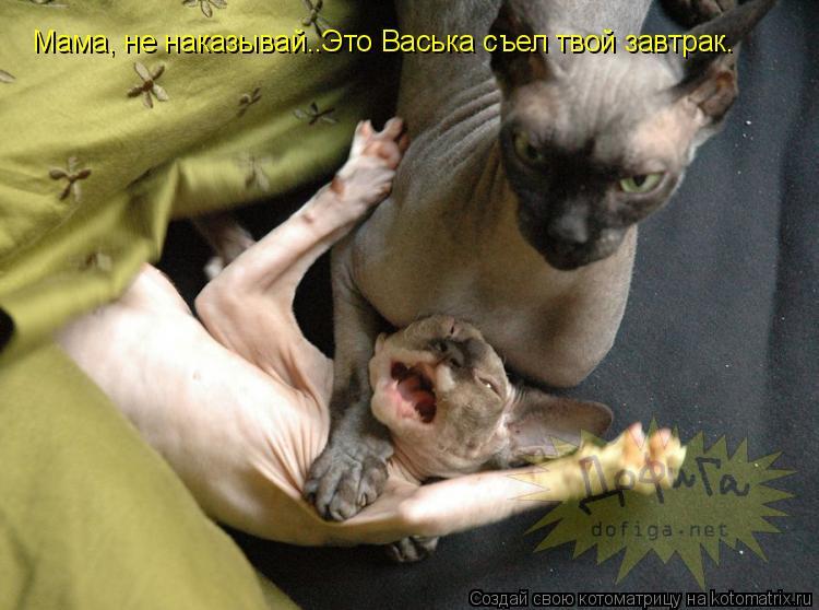 Котоматрица: Мама, не наказывай..Это Васька съел твой завтрак.