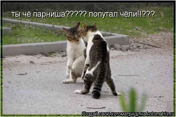 Котоматрица: ты чё парниша????? попутал чёли!!???
