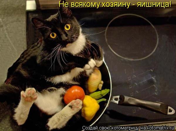 Котоматрица: Не всякому хозяину - яишница!