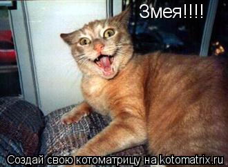 Котоматрица: Змея!!!!