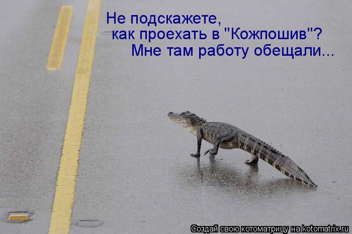 """Котоматрица: Не подскажете,  как проехать в """"Кожпошив""""? Мне там работу обещали..."""