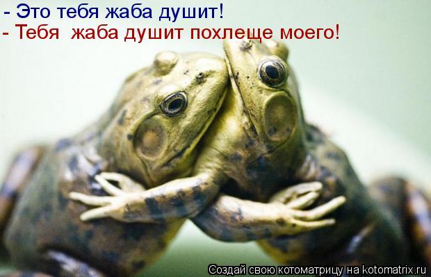 Котоматрица: - Это тебя жаба душит! - Тебя жаба душит похлеще моего!