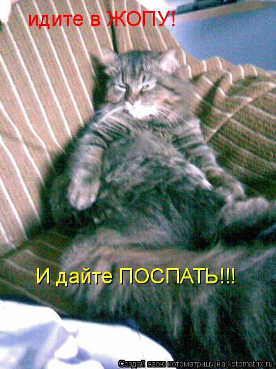 Котоматрица: идите в ЖОПУ! И дайте ПОСПАТЬ!!!