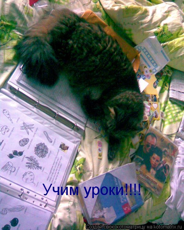 Котоматрица: Учим уроки!!!!