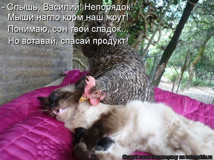 Котоматрица: - Слышь, Василий! Непорядок!  Мыши нагло корм наш жрут! Понимаю, сон твой сладок... Но вставай, спасай продукт!