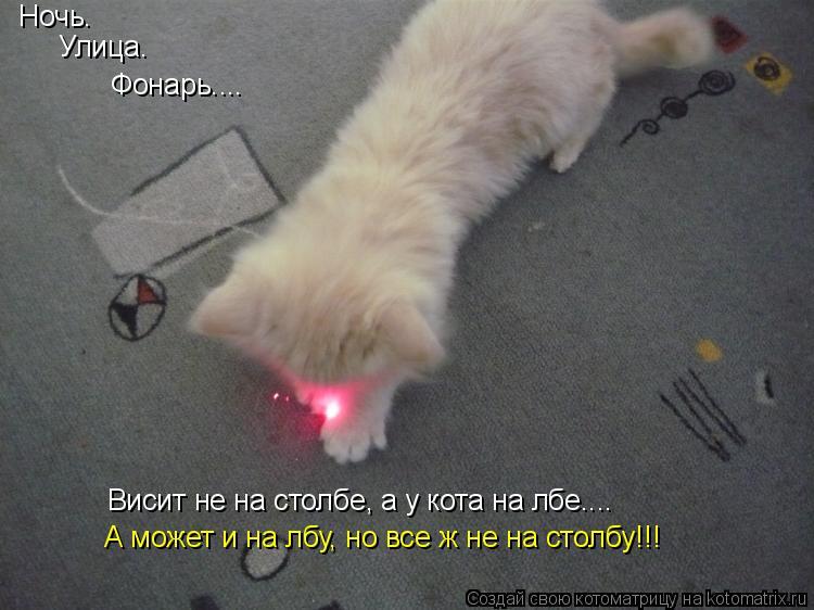 Котоматрица: Ночь. Улица. Фонарь.... Висит не на столбе, а у кота на лбе.... А может и на лбу, но все ж не на столбу!!!