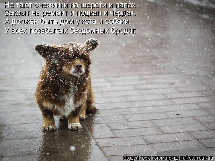 Котоматрица: Не тают снежинки на шерсти и лапах Закрыт на ремонт и подвал и чердак. А должен быть дом у кота и собаки. У всех позабытых бездомных бродяг.