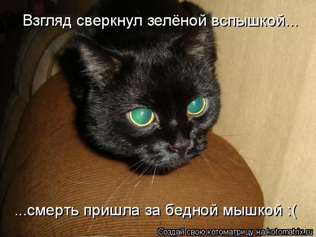 Котоматрица: ...смерть пришла за бедной мышкой :( Взгляд сверкнул зелёной вспышкой...