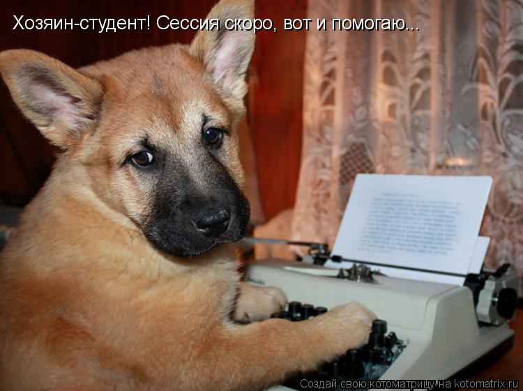 Котоматрица: Хозяин-студент! Сессия скоро, вот и помогаю...