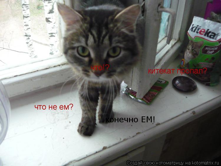 Котоматрица: что!? китекат пропал? что не ем? конечно ЕМ!