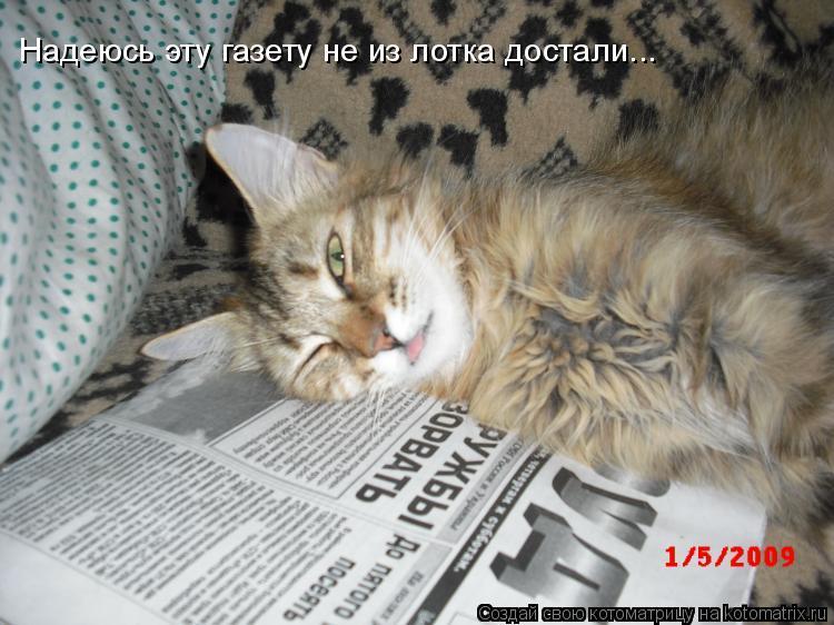 Котоматрица: Надеюсь эту газету не из лотка достали...