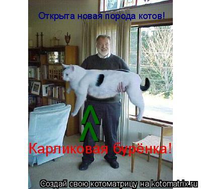 Котоматрица: Открыта новая порода котов! Карликовая бурёнка!  ^ ^