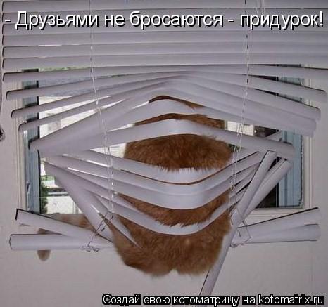 Котоматрица: - Друзьями не бросаются - придурок!