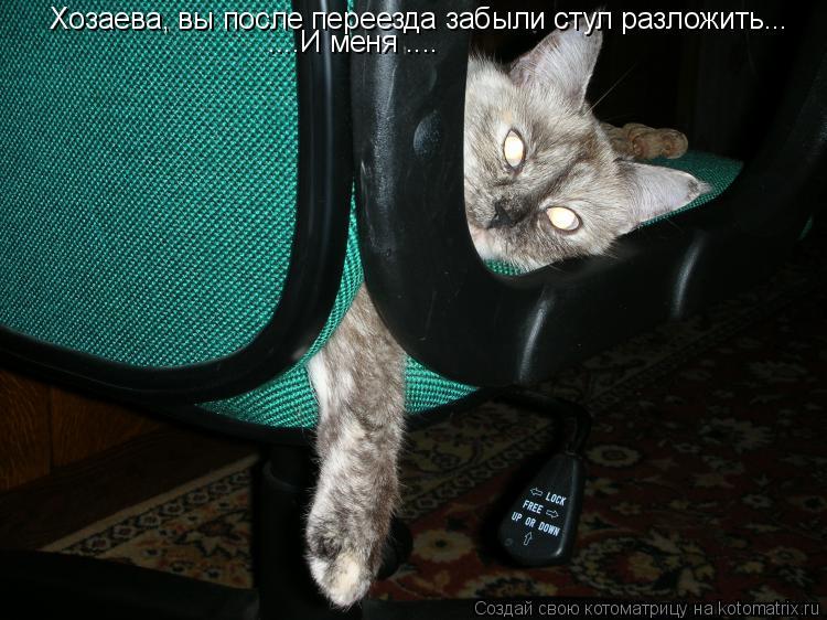 Котоматрица: Хозаева, вы после переезда забыли стул разложить... ....И меня ....