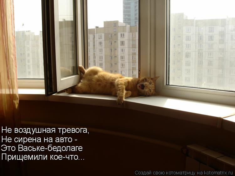 Котоматрица: Не сирена на авто - Не сирена на авто - Это Ваське-бедолаге Не воздушная тревога, Прищемили кое-что...