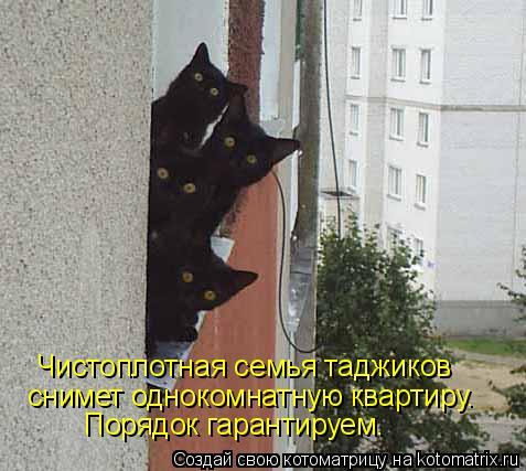 Котоматрица: снимет однокомнатную квартиру. Чистоплотная семья таджиков Порядок гарантируем.