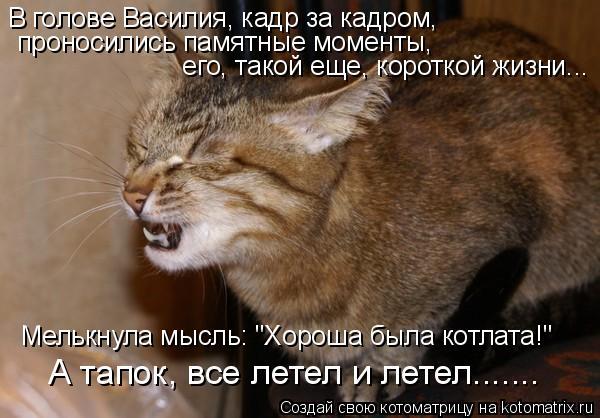 """Котоматрица: В голове Василия, кадр за кадром,  проносились памятные моменты,  его, такой еще, короткой жизни... Мелькнула мысль: """"Хороша была котлата!"""" А та"""