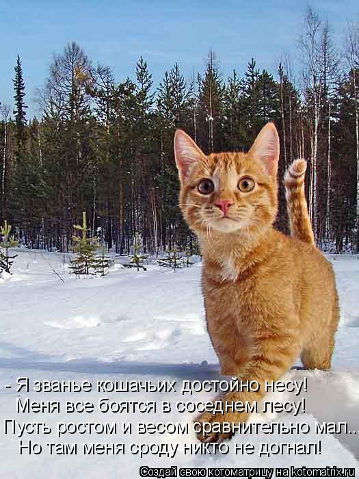 Котоматрица: - Я званье кошачьих достойно несу! Меня все боятся в соседнем лесу! Пусть ростом и весом сравнительно мал... Но там меня сроду никто не догнал!