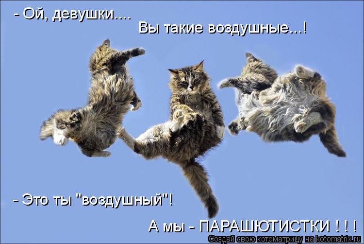 """Котоматрица: - Ой, девушки.... Вы такие воздушные...! - Это ты """"воздушный""""!  А мы - ПАРАШЮТИСТКИ ! ! !"""