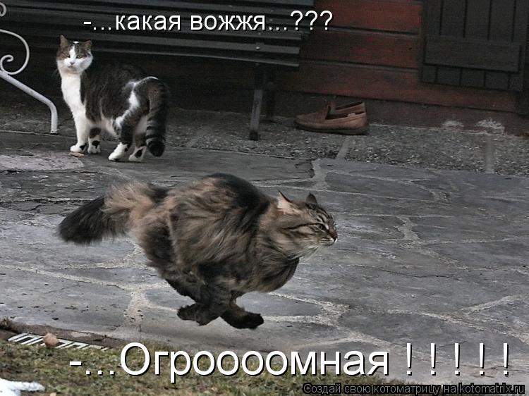 Котоматрица: -...какая вожжя...??? -...Огроооомная ! ! ! ! !