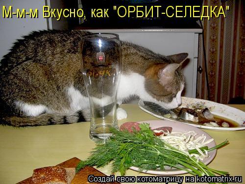 "Котоматрица: М-м-м Вкусно, как ""ОРБИТ-СЕЛЕДКА"""