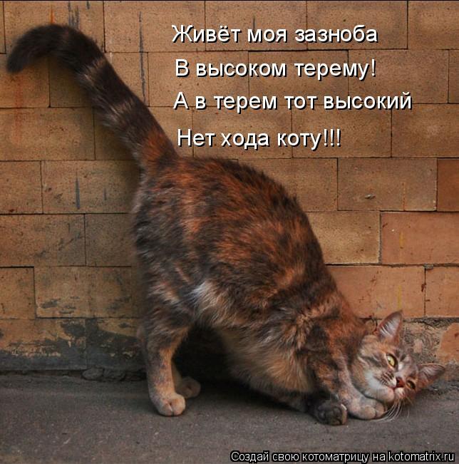 Котоматрица: Живёт моя зазноба В высоком терему! А в терем тот высокий Нет хода коту!!!