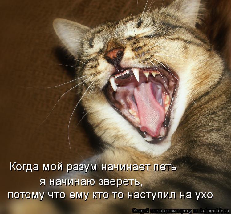 Котоматрица: Когда мой разум начинает петь потому что ему кто то наступил на ухо я начинаю звереть,