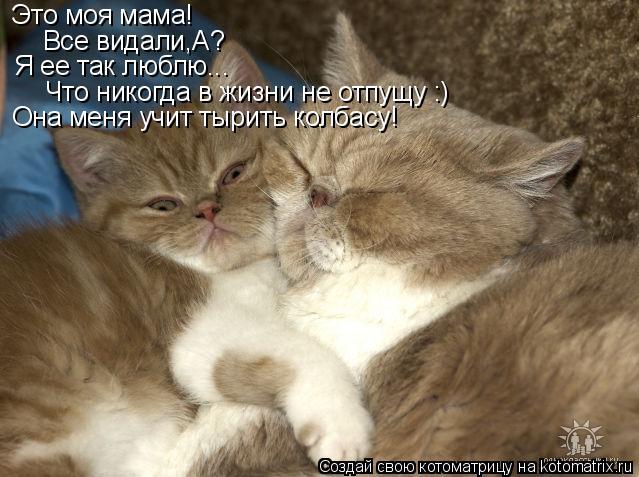 Котоматрица: Это моя мама! Все видали,А? Я ее так люблю... Что никогда в жизни не отпущу :) Она меня учит тырить колбасу!