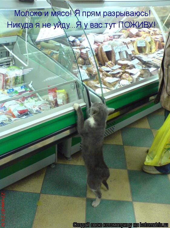 Котоматрица: Молоко и мясо! Я прям разрываюсь! Никуда я не уйду...Я у вас тут ПОЖИВУ!