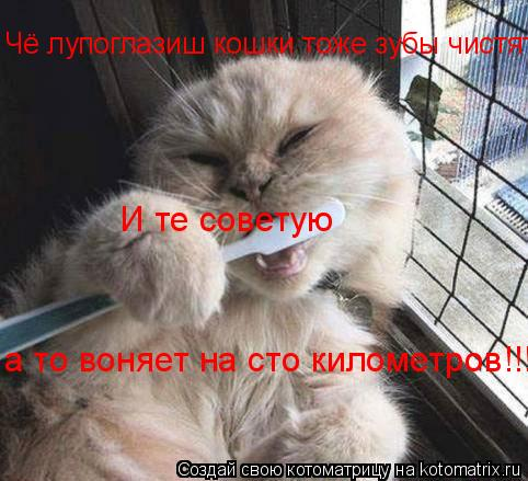 Котоматрица: Чё лупоглазиш кошки тоже зубы чистят!!!! И те советую  а то воняет на сто километров!!!